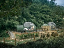 Wake Up In A Jungle Bubble At This Stunning Elephant Sanctuary