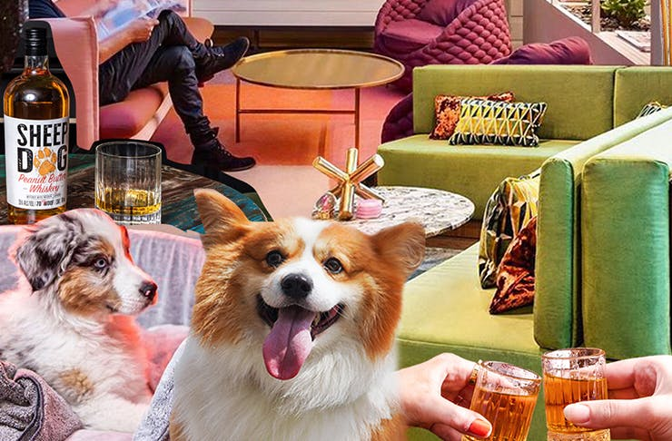 collage of dogs, alcohol and furntiture