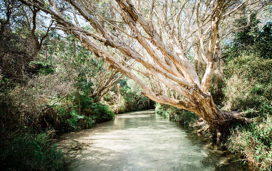 a creek, fringed by tangle of mangroves and trees.