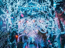 Wander Through Illuminated Ice Trees At The Grounds' New Frozen 2-Inspired Winter Wonderland