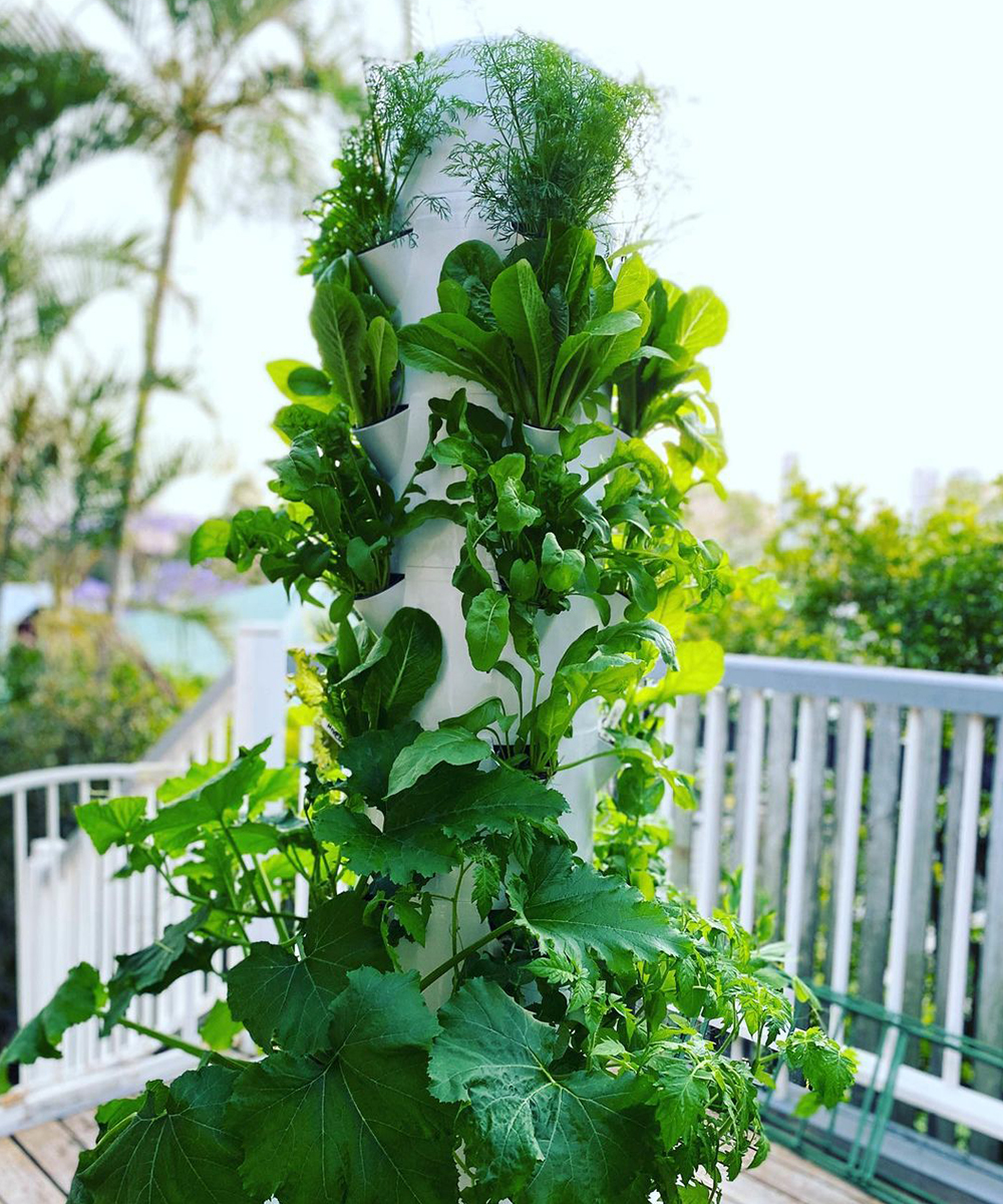 clusters of greenery grow on a vertical garden.