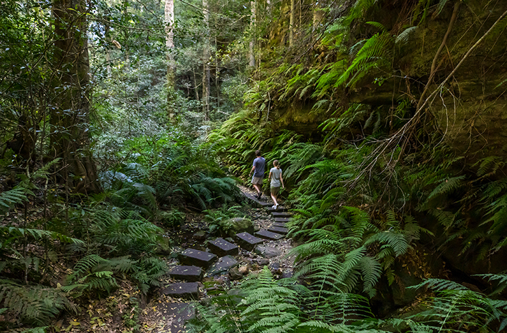 two people walking down rainforest gully