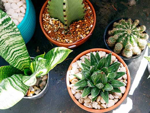 Greenhouse Gathering