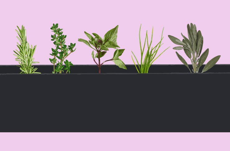 How To Grow The Perfect Herb Garden (For Serial Plant Killers