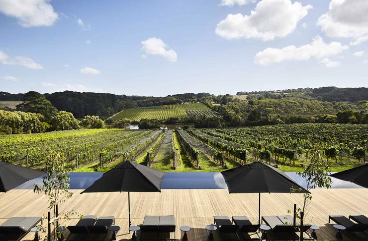 pool overlooking vineyard