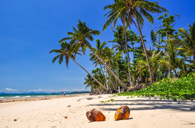 tropical shoreline with palm trees and cocnuts