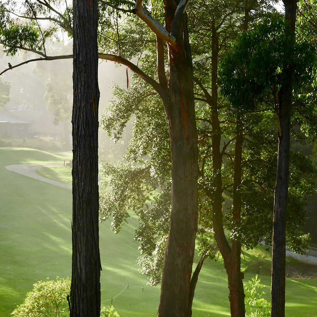 Early morning light through the trees on the golf course on Mollymook drive NSW