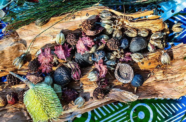 collection of bush tucker on tree bark