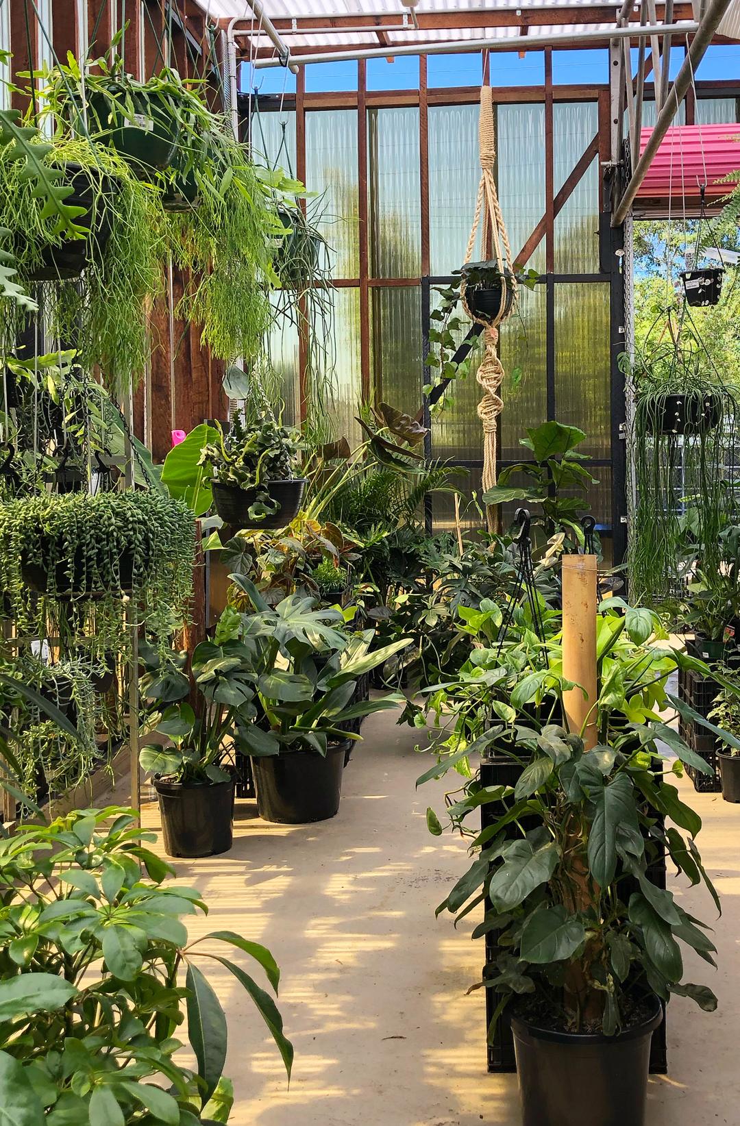 inside darlinghurst greenhouse