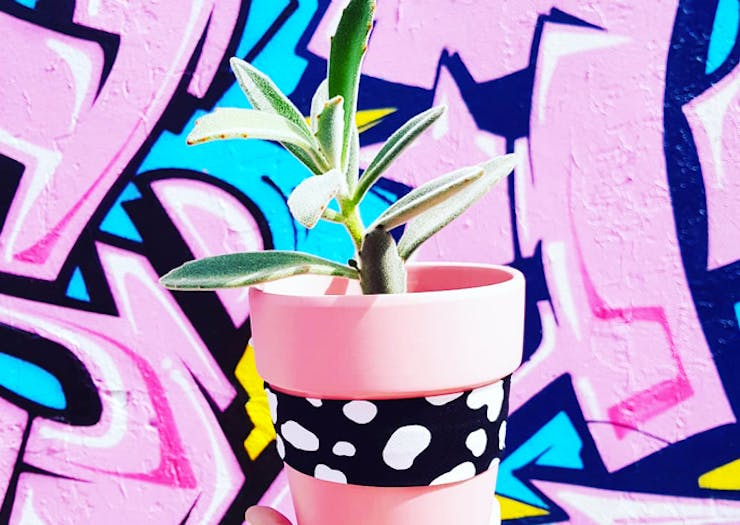 Shop Sassy Ferns And Figs At PlantGirl, Sydney's New Same Day Plant Service