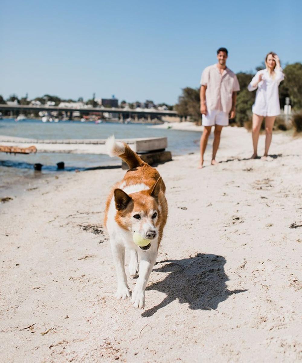a dog runs along a white sand beach with a couple behind him