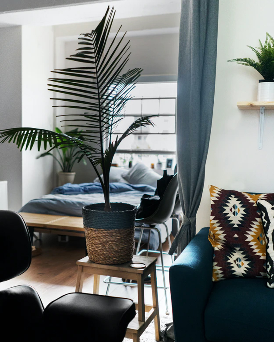 corner of studio apartment with modern furniture and a large indoor plant on a stool