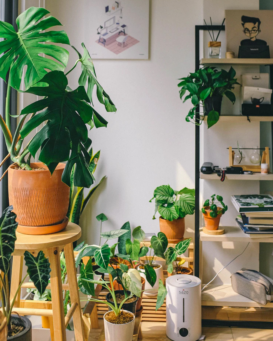 corner of room filled with lots of natural light and a bunch of indoor plants