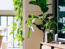 Transform Your Space Into A Jungle Escape With The Best Plant Deliveries In Sydney