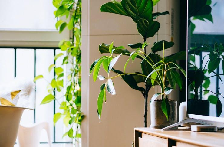 corner of home filled with indoor plants