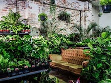 There's A Rare Plant House Party Coming To Fremantle