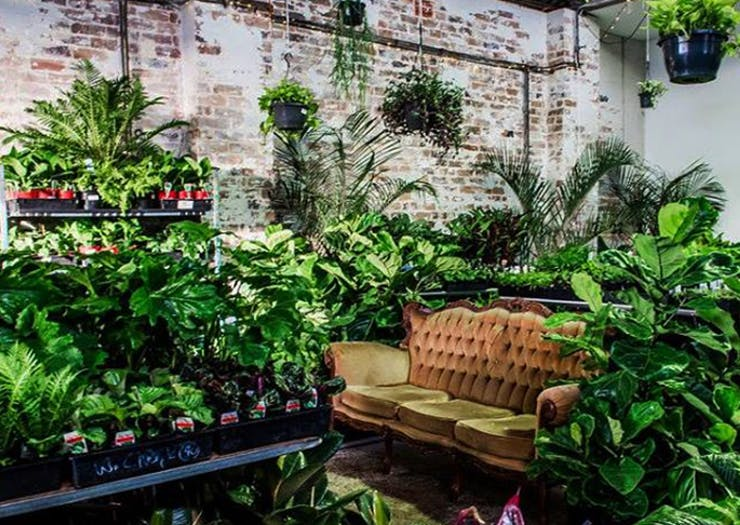 This Massive Warehouse Is Hosting A Rare Plant House Party