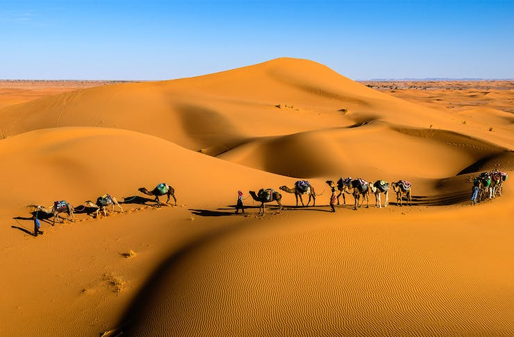 a train of camels walk across sand dunes, a brilliant blue sky in the background.