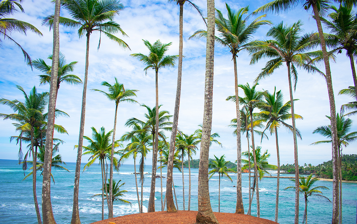 a group of palm trees line a beach in sri lanka.