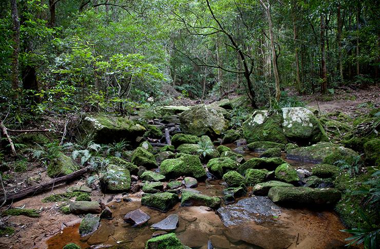 forest walk inside strickland state forest