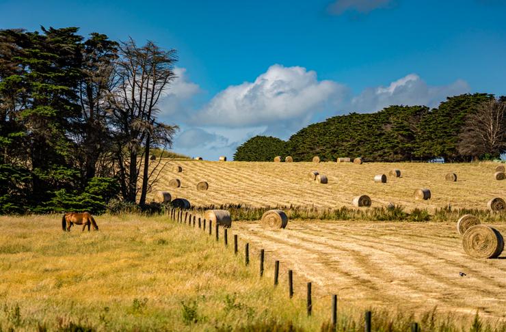 rolling farm hills in tasmania with horse