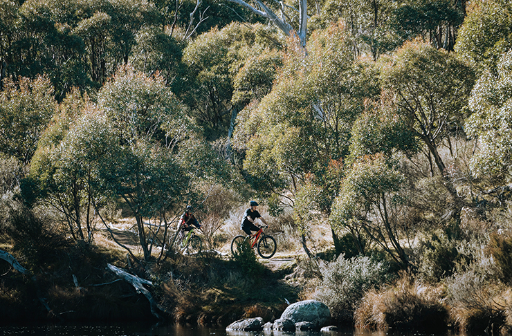 two people riding bikes on bushy track near river