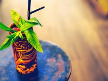 24 Of Perth's Best Cocktails
