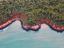 The Ultimate Guide To The Tiwi Islands