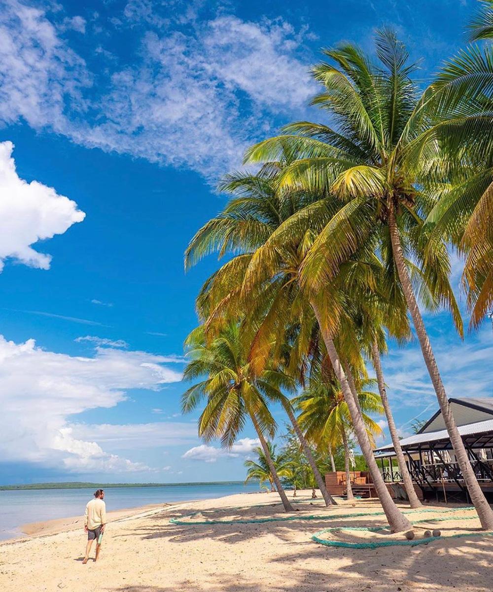 towering palm trees frame a stunning beach. a man walks along the shoreline.