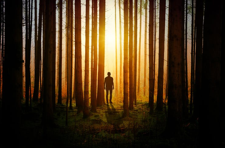 a silhouette of a man amongst trees in a forest.