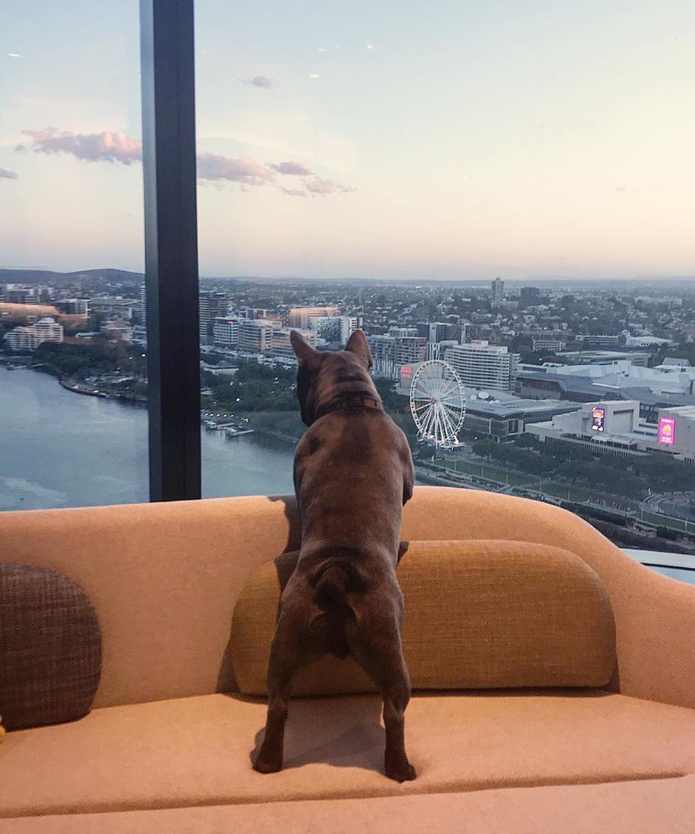 a dog sitting on a couch, looks out over brisbane