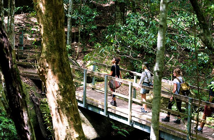 people walking across wooden bridge in national park