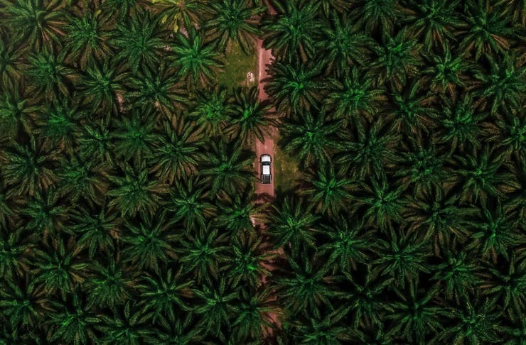 car driving through palm oil plantation in malaysia