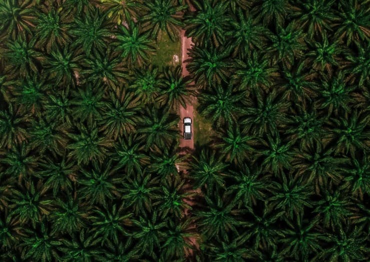 Keep Your Sustainable Streak Strong, Here's Everything You Need To Know About Palm Oil
