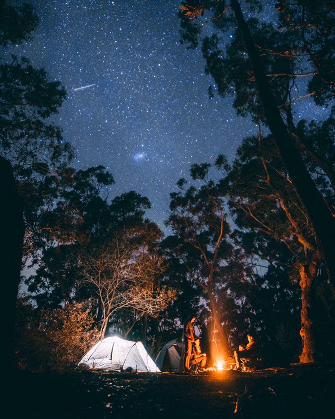 campsite within pine forest on a starry night